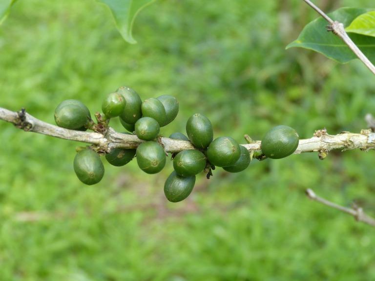 coffee-beans-280732_1920